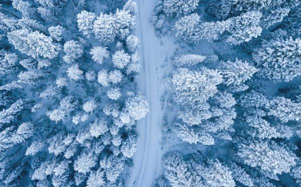 pexels-ruvim-miksanskiy-1438761
